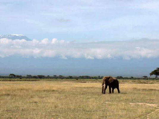 reiseblog-detailjaeger-safari