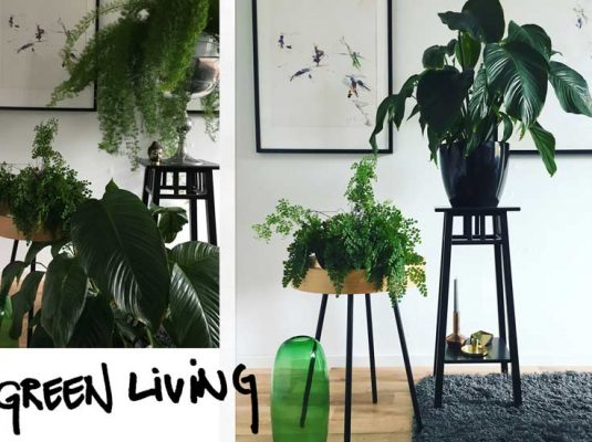 Grünschi Dschungel in der Wohnung - Wohnblock Berlin
