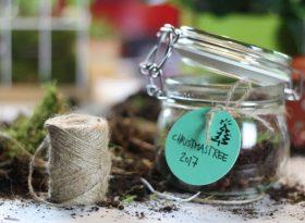 Bild mit Einwegglas - Gewächshaus für Weihnachtsbaum auf Wohnblog Mokowo