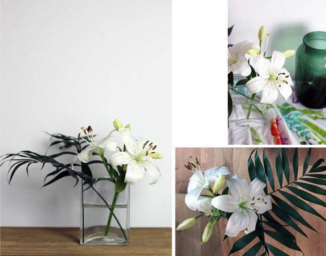 Bild mit Blumen vor weisser Wand auf Wohnblog Mokowo