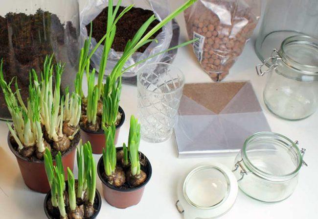 Frühlingsblüher Vorbereitung - Bild mit Töpfen und Gläsern. Frühlingsdeko