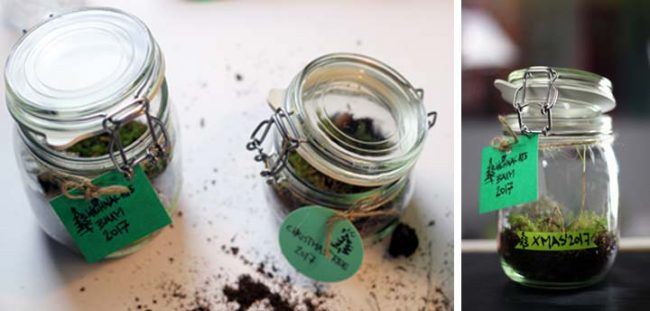 Bild von Einwegglas als Gewächshaus DIY Interior Blog