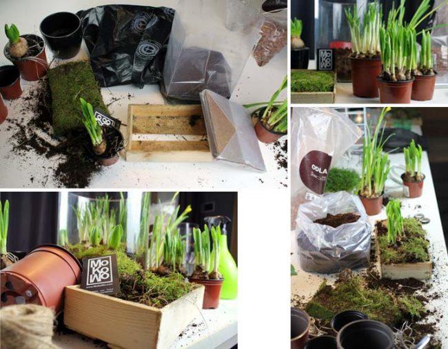 Bepflanzen der Holzkiste mit Frühlingsblühern zur Dekoration zu Ostern