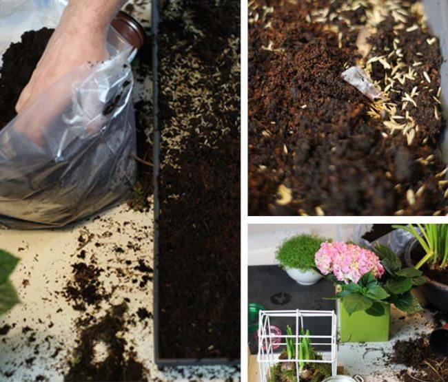 Bepflanzen von Balkonkästen Untersetzern mit Rasen zur Oster Dekoration DIY