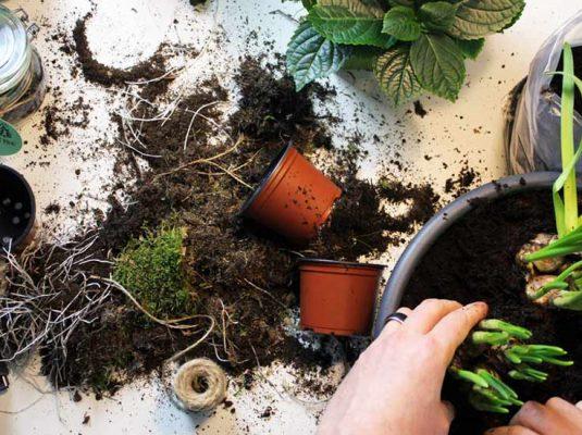 Bild Bepflanzen einer Pflanzschale zur Dekoration DIY - Interior Blog Mokowo