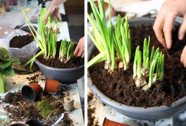 Bepflanzen einer Pflanzschale mit Frühlingsblühern zur Dekoration DIY auf dem Interior Blog Mokowo
