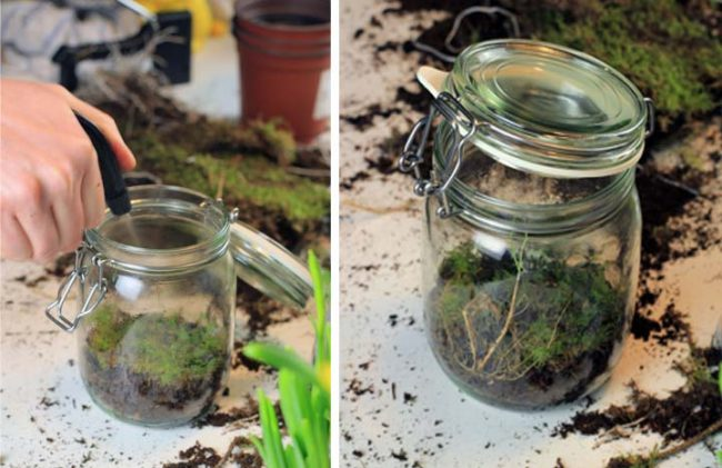 Zwei Bilder vom Einwegglas als Gewächshaus DIY Interior Blog
