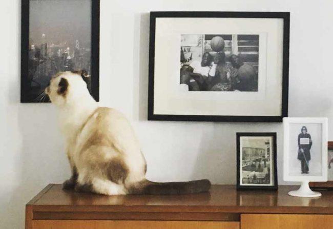 Katze vor Bilderwand - DIY Design Kratzbaum