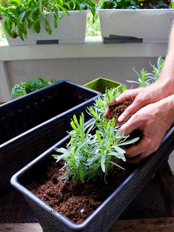 schmalen Balkon bepflanzen