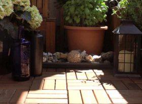 Holz Bodenbelag für den Balkon Blogbeitrag